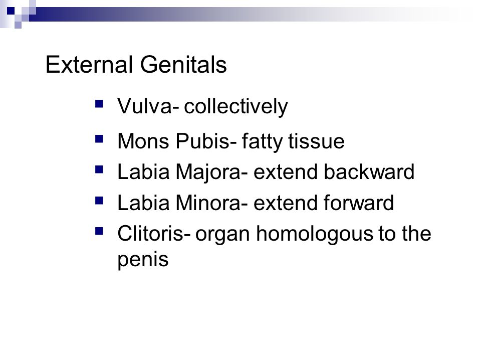 External Genitals Vulva- collectively Mons Pubis- fatty tissue
