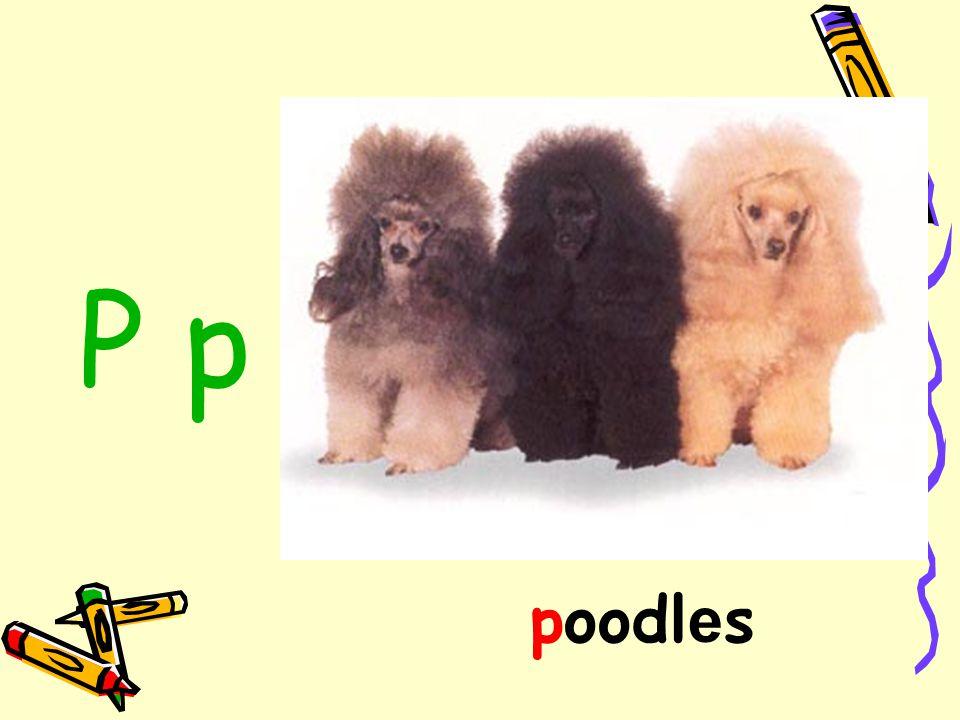 P p poodles