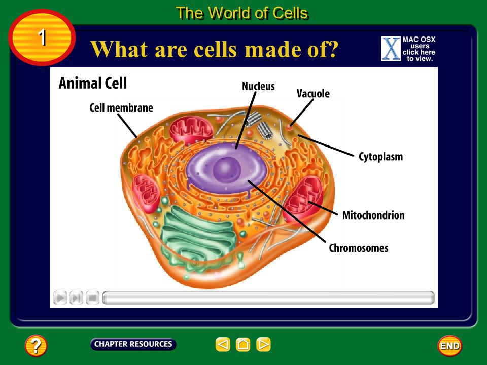The World of Cells 1 What are cells made of