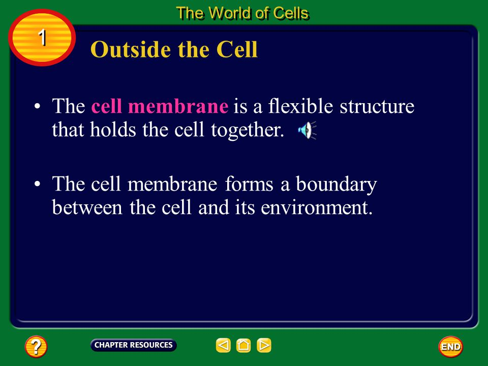 The World of Cells 1. Outside the Cell. The cell membrane is a flexible structure that holds the cell together.