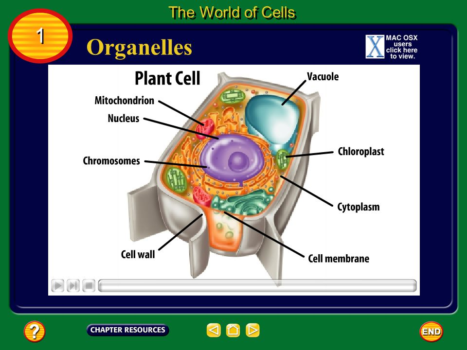 The World of Cells 1 Organelles