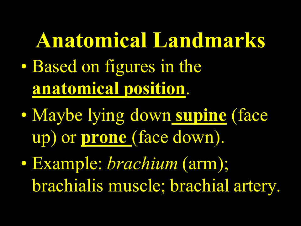 Anatomical Landmarks Based on figures in the anatomical position.