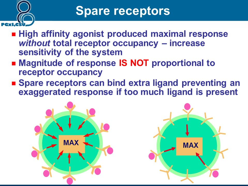 Spare receptors High affinity agonist produced maximal response without total receptor occupancy – increase sensitivity of the system.