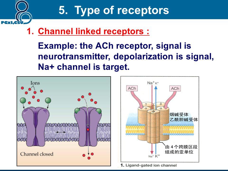 5. Type of receptors Channel linked receptors :