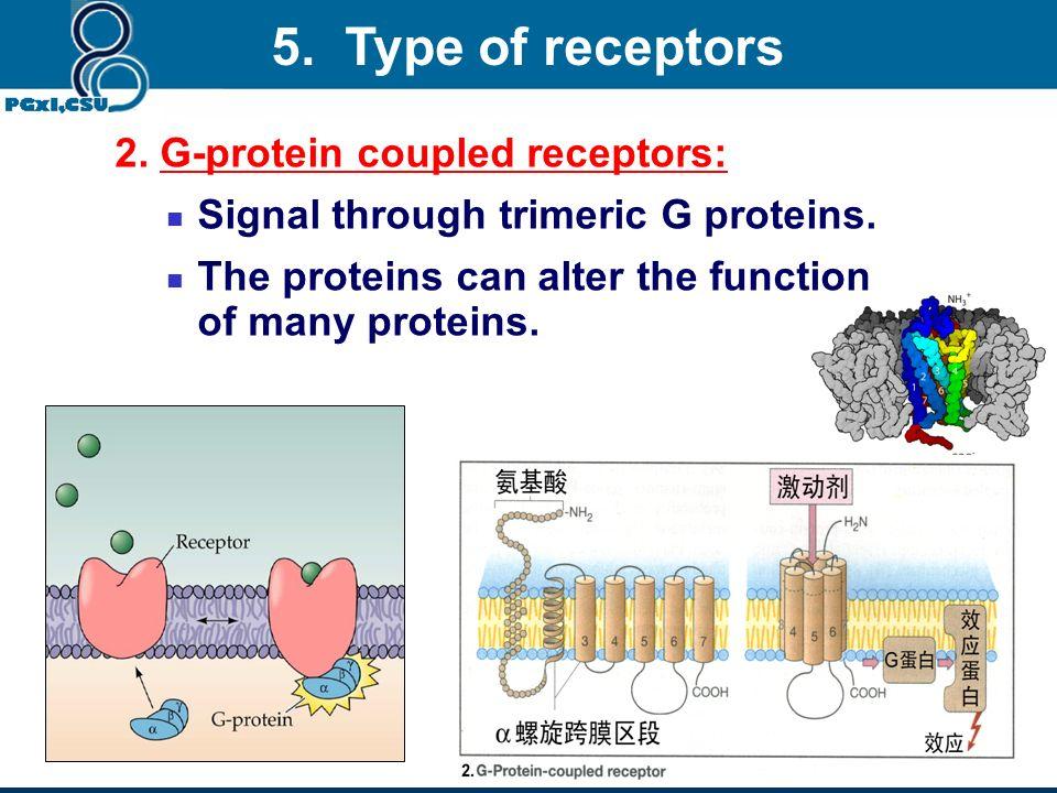 5. Type of receptors 2. G-protein coupled receptors: