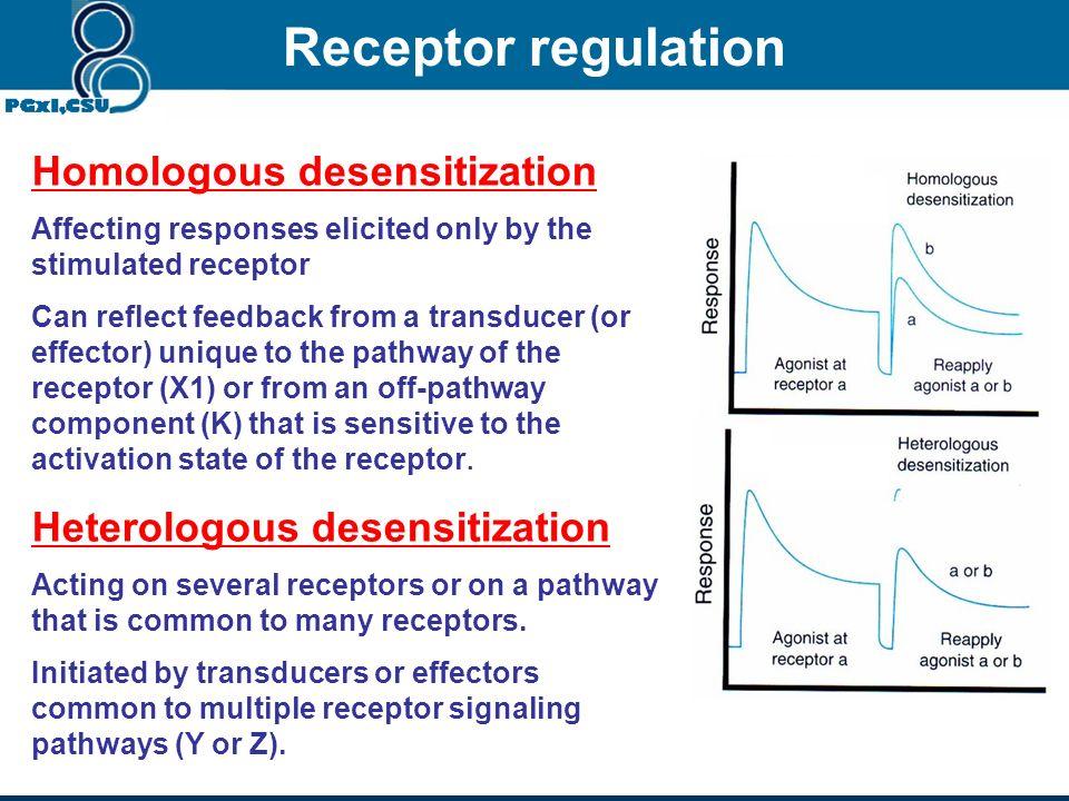 Receptor regulation Homologous desensitization