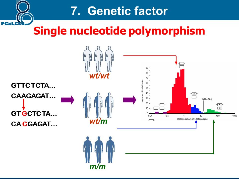 7. Genetic factor Single nucleotide polymorphism wt/wt wt/m m/m