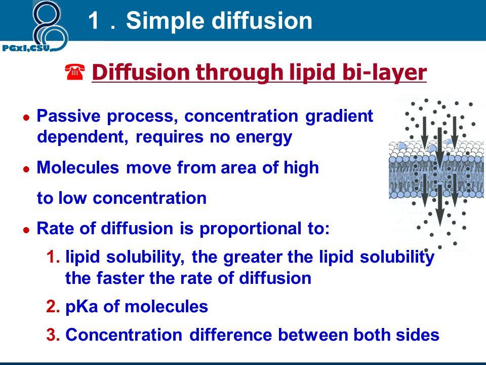 Diffusion through lipid bi-layer