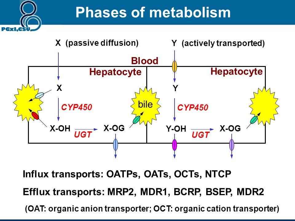 Phases of metabolism Blood Hepatocyte Hepatocyte bile