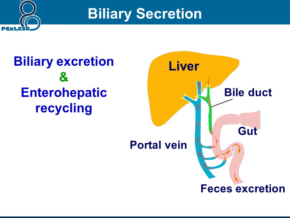 Enterohepatic recycling