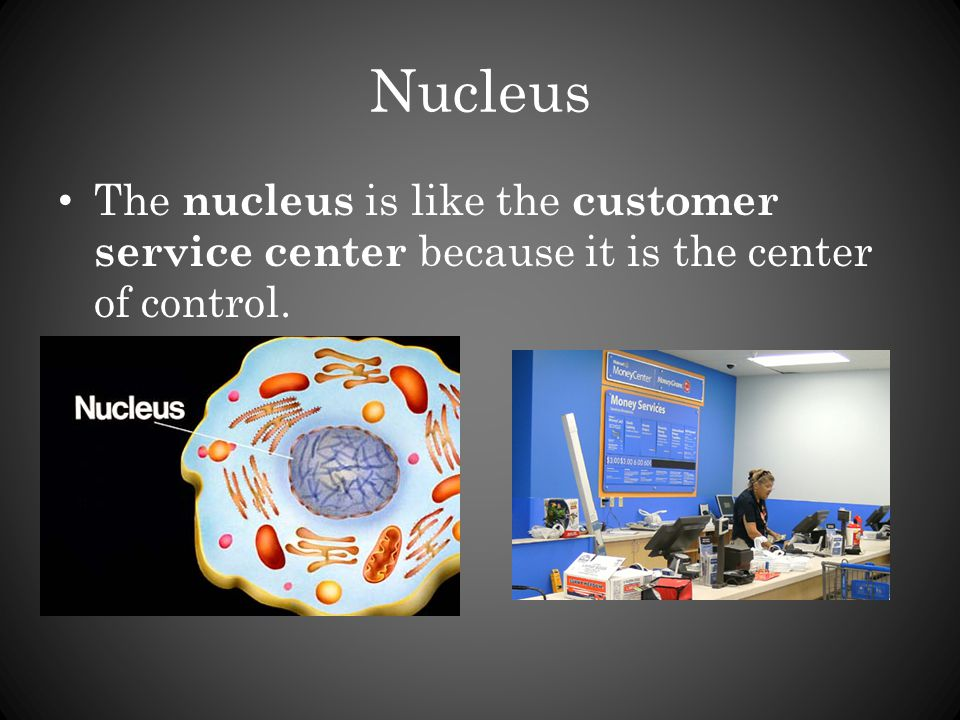 Nucleus The nucleus is like the customer service center because it is the center of control.