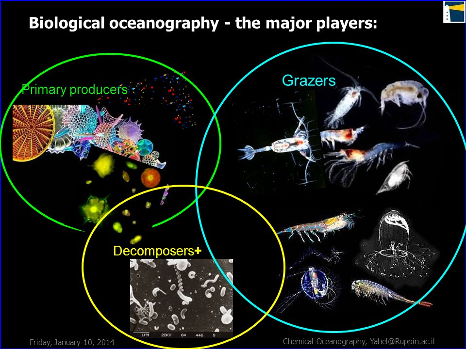 Biological oceanography - the major players: