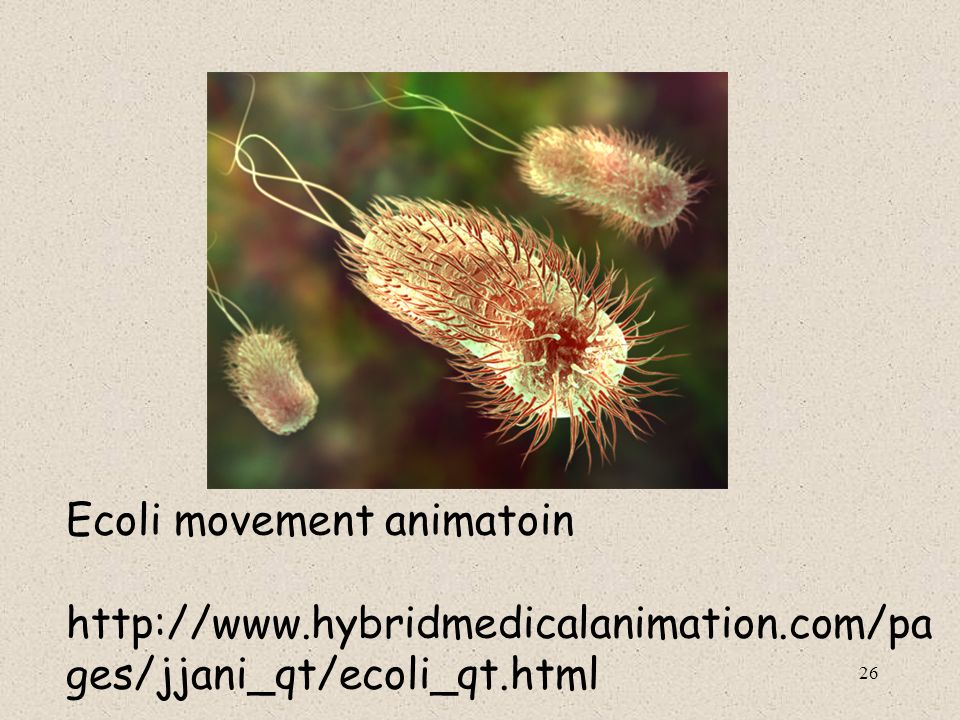 Ecoli movement animatoin