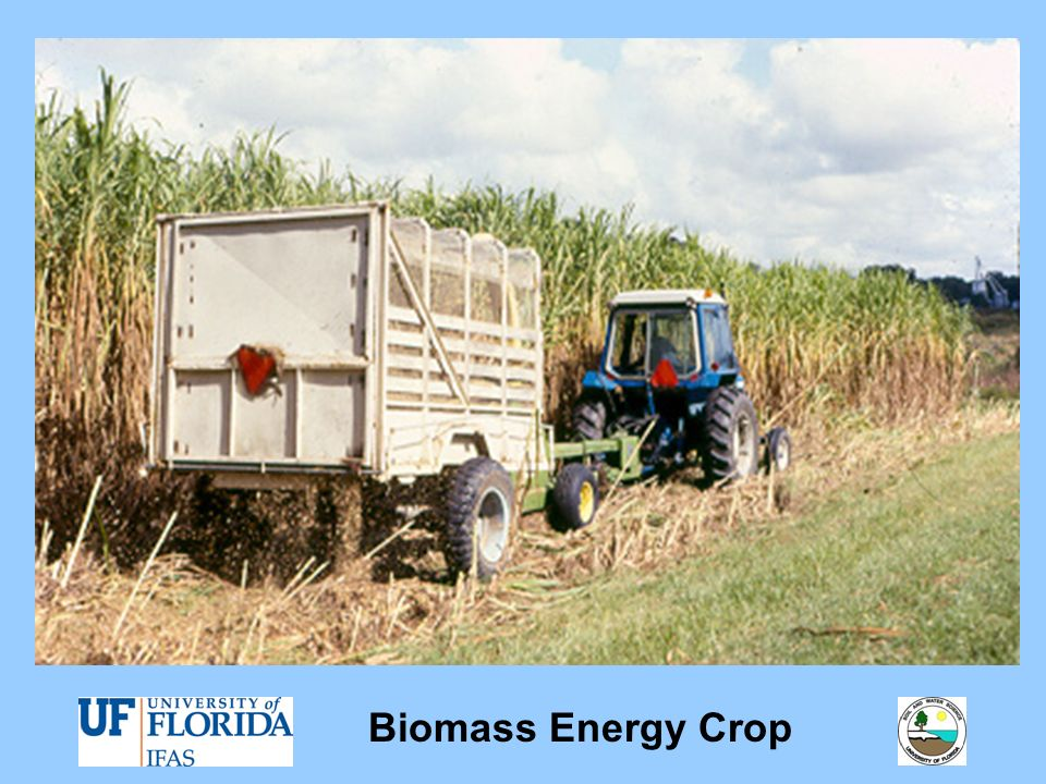 Biomass Energy Crop