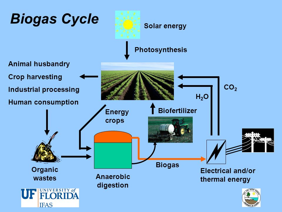 Biogas Cycle Solar energy Photosynthesis Animal husbandry