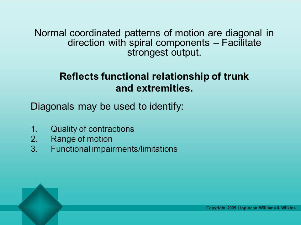 Reflects functional relationship of trunk