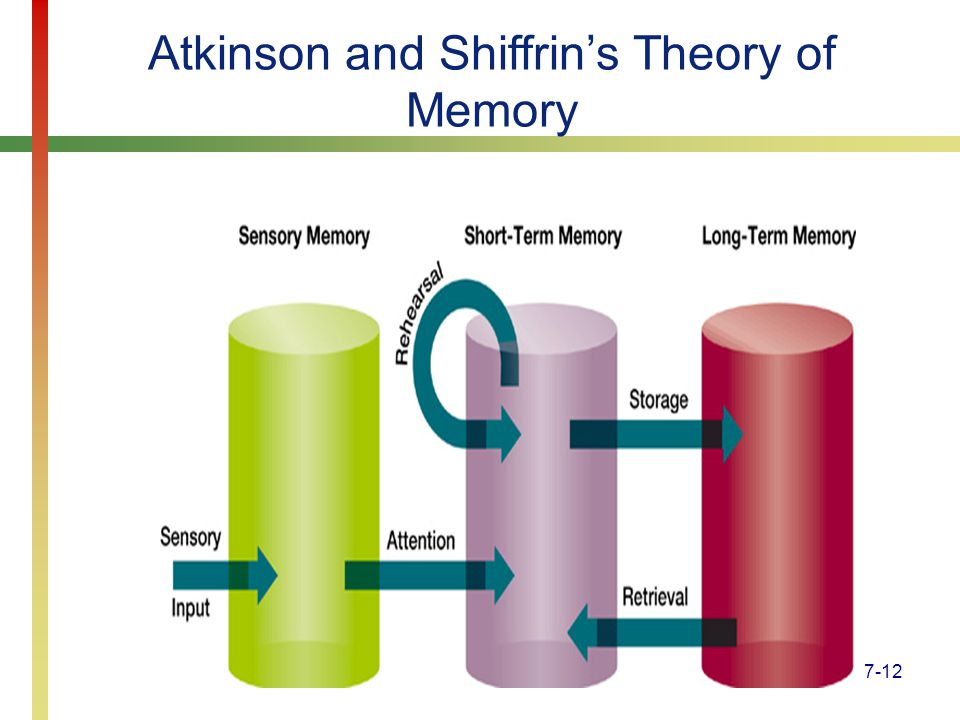 Atkinson and Shiffrin's Theory of Memory
