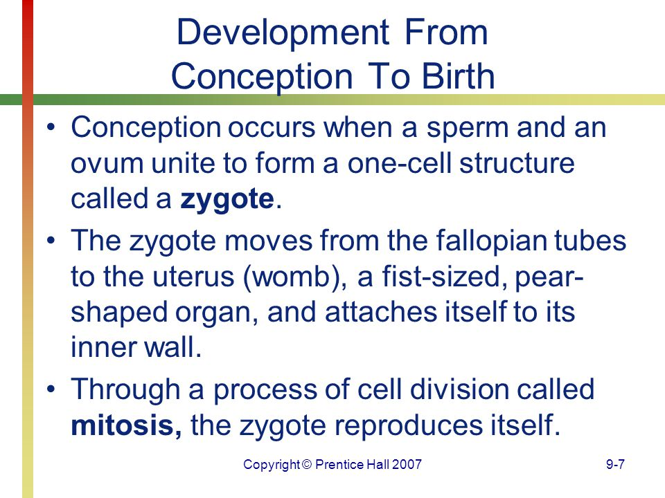 Development From Conception To Birth