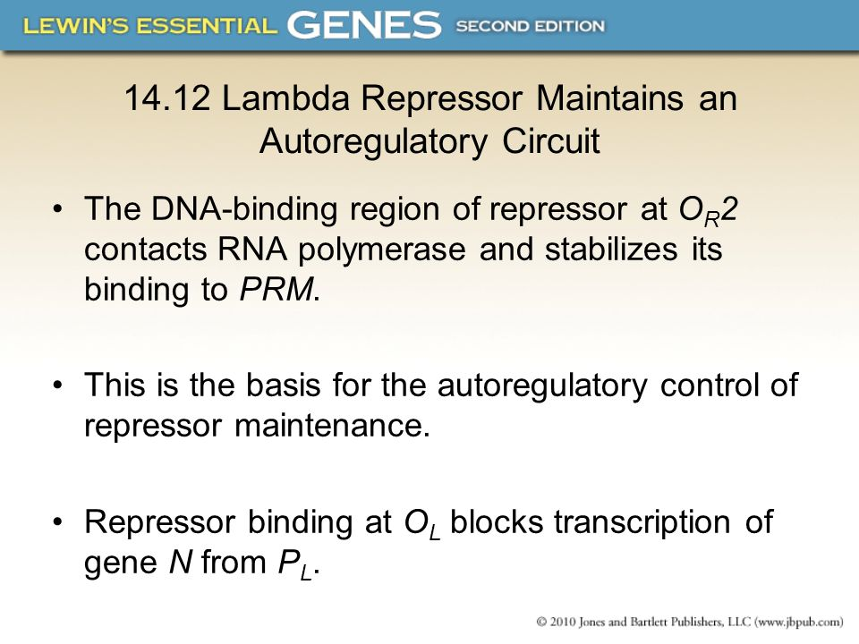 14.12 Lambda Repressor Maintains an Autoregulatory Circuit