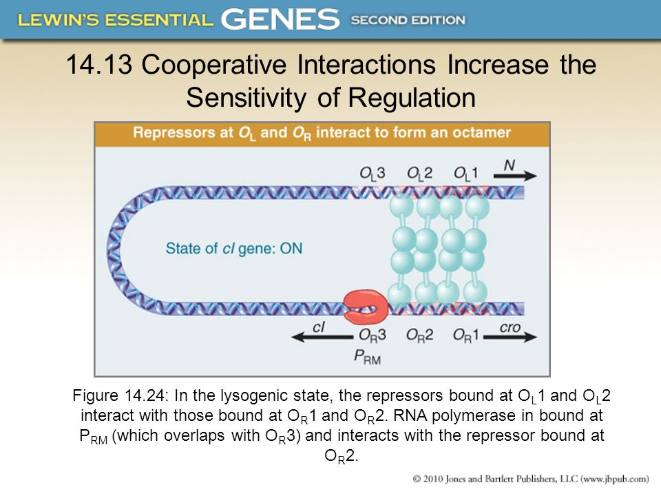 14.13 Cooperative Interactions Increase the Sensitivity of Regulation