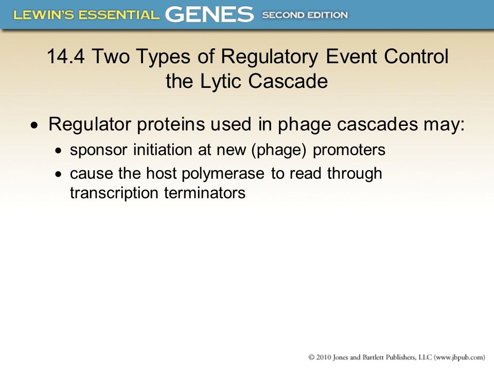 14.4 Two Types of Regulatory Event Control the Lytic Cascade