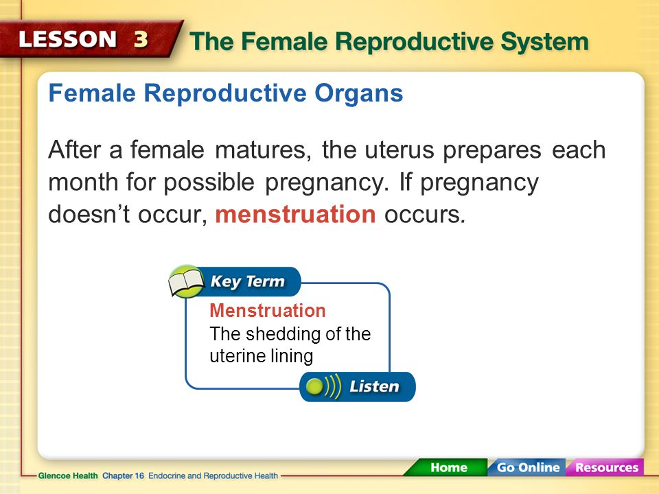 Female Reproductive Organs