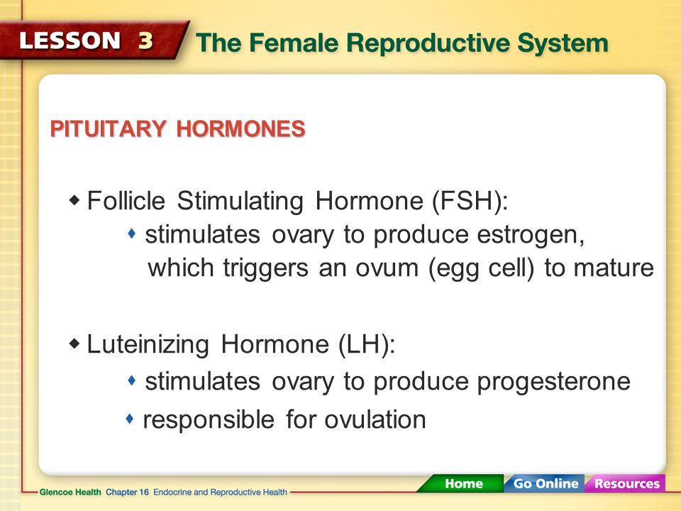 Follicle Stimulating Hormone (FSH):