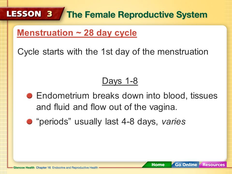 Menstruation ~ 28 day cycle