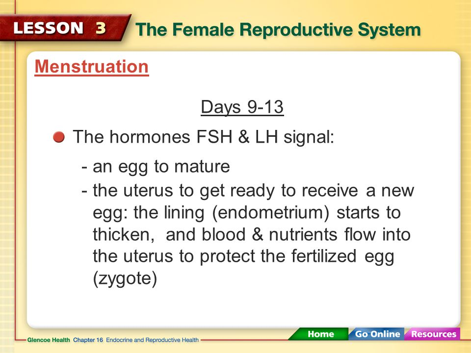 Menstruation Days 9-13. The hormones FSH & LH signal: - an egg to mature. - the uterus to get ready to receive a new.