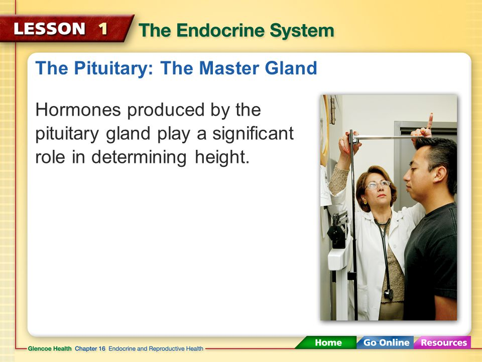 The Pituitary: The Master Gland
