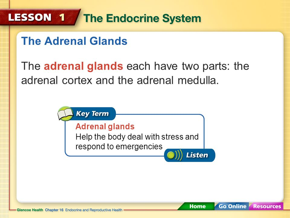 The Adrenal Glands The adrenal glands each have two parts: the adrenal cortex and the adrenal medulla.