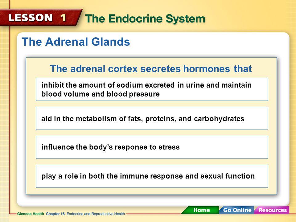 The adrenal cortex secretes hormones that