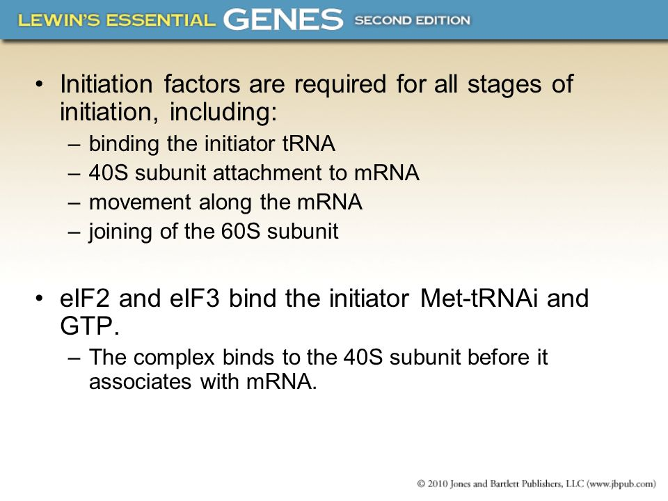 eIF2 and eIF3 bind the initiator Met-tRNAi and GTP.