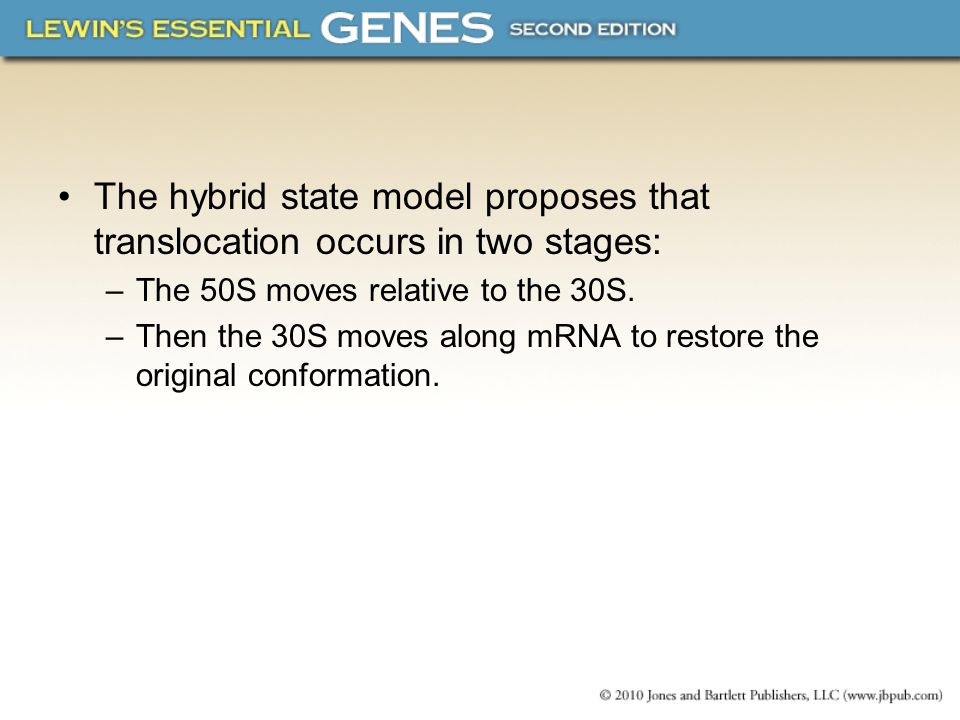 The hybrid state model proposes that translocation occurs in two stages: