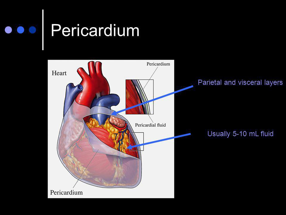 Pericardium Parietal and visceral layers Usually 5-10 mL fluid