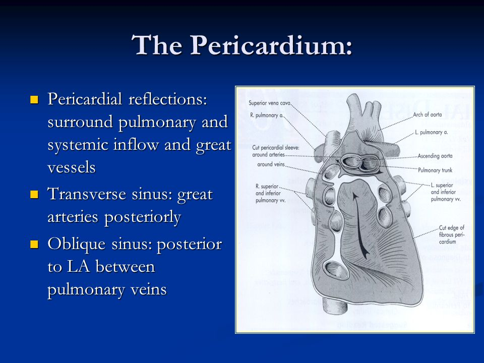 The Pericardium: Pericardial reflections: surround pulmonary and systemic inflow and great vessels.