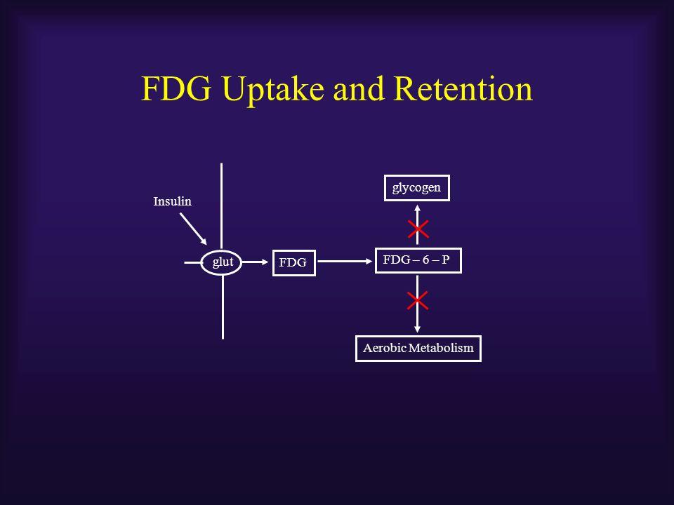 FDG Uptake and Retention