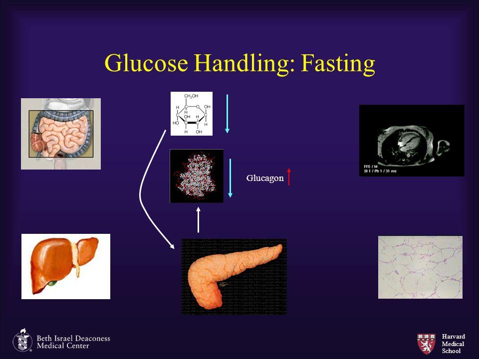 Glucose Handling: Fasting