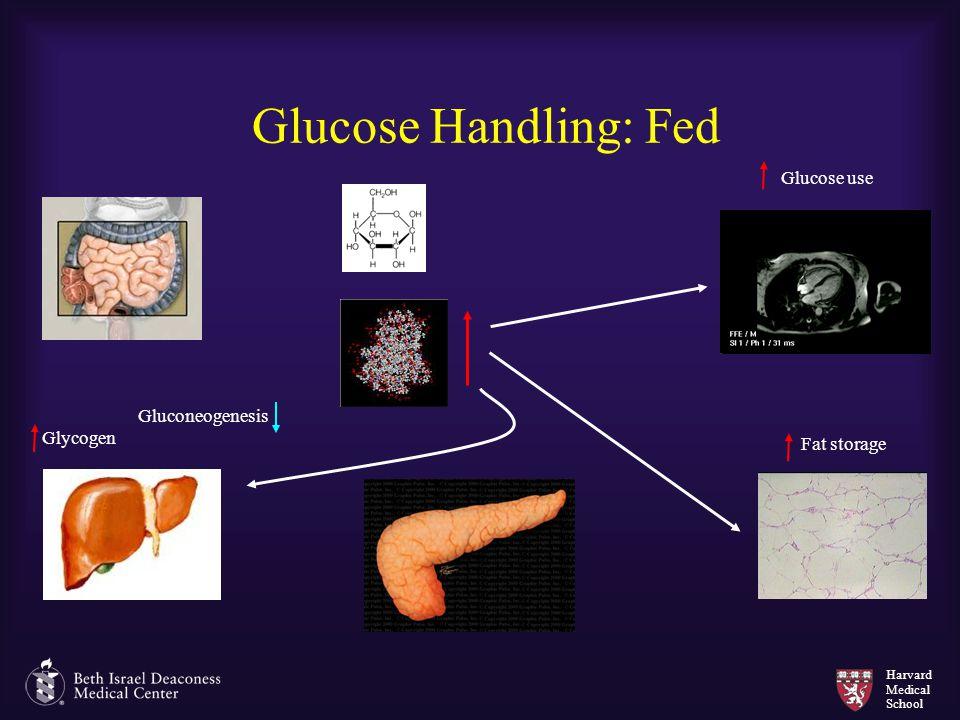 Glucose Handling: Fed Glucose use Gluconeogenesis Glycogen Fat storage