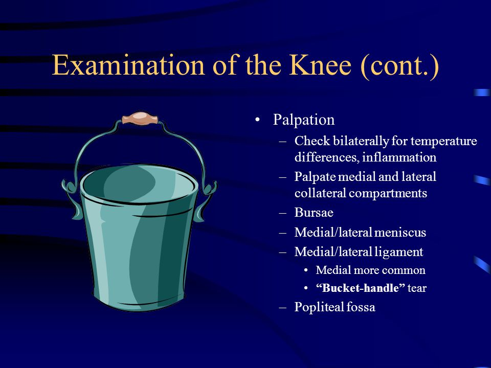 Examination of the Knee (cont.)