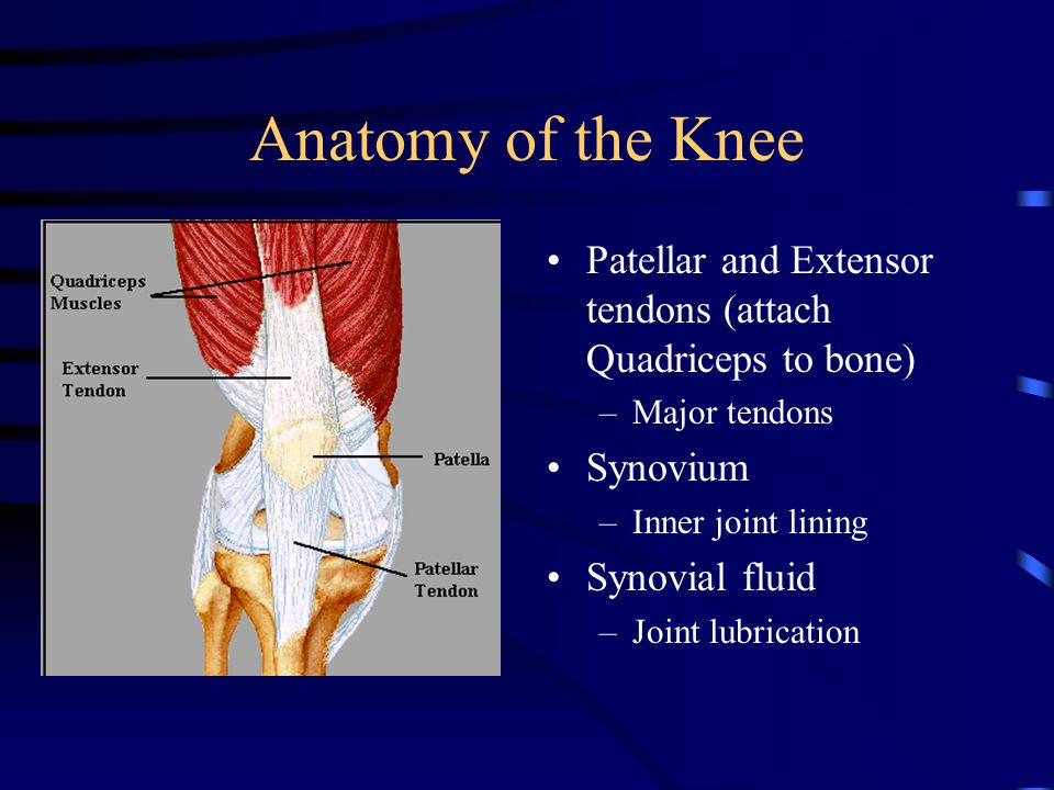 The anatomy of the knee