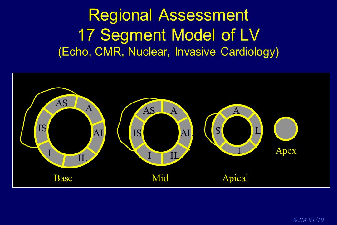 Regional Assessment 17 Segment Model of LV (Echo, CMR, Nuclear, Invasive Cardiology)