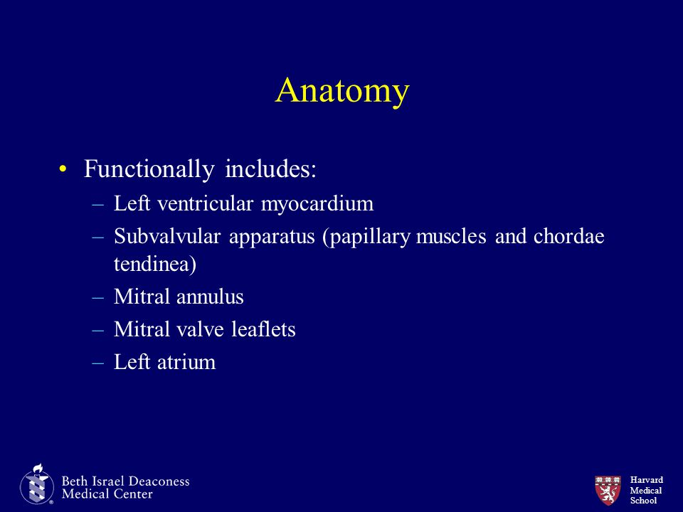 Anatomy Functionally includes: Left ventricular myocardium