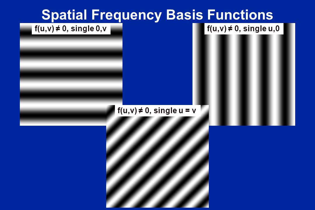 Spatial Frequency Basis Functions