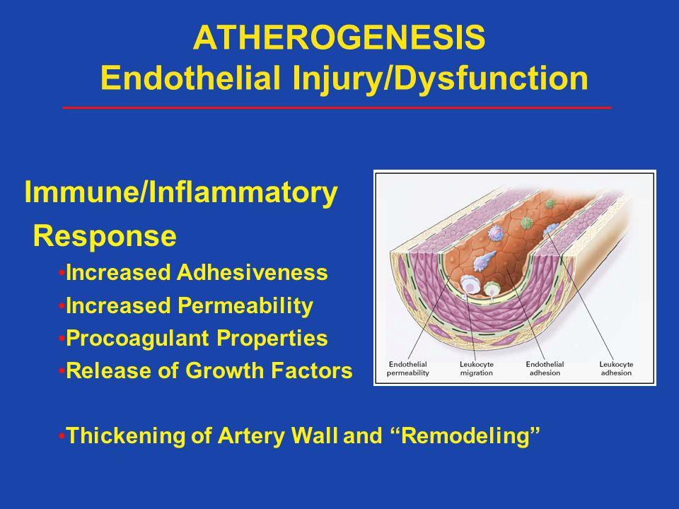ATHEROGENESIS Endothelial Injury/Dysfunction
