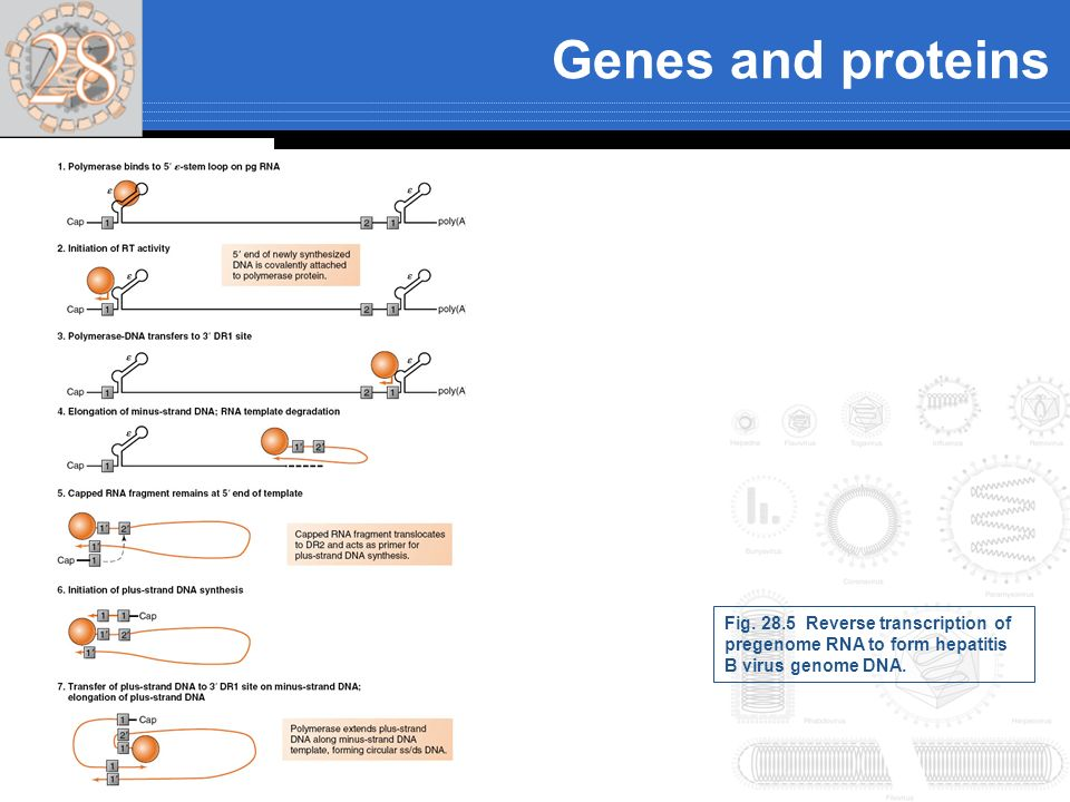 Genes and proteins Fig.