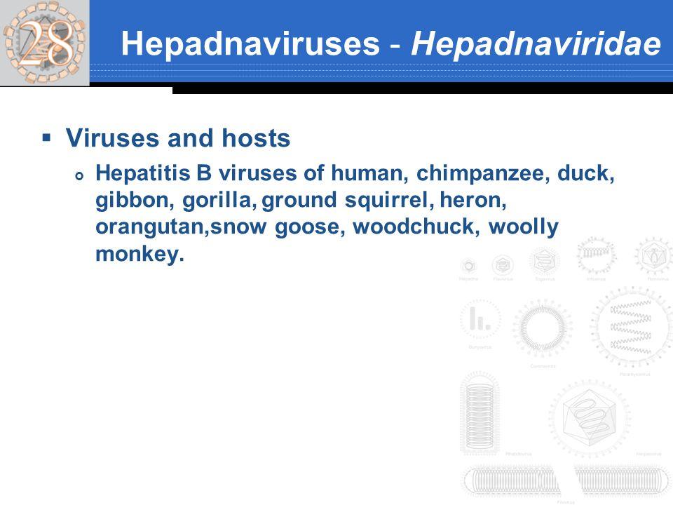 Hepadnaviruses - Hepadnaviridae