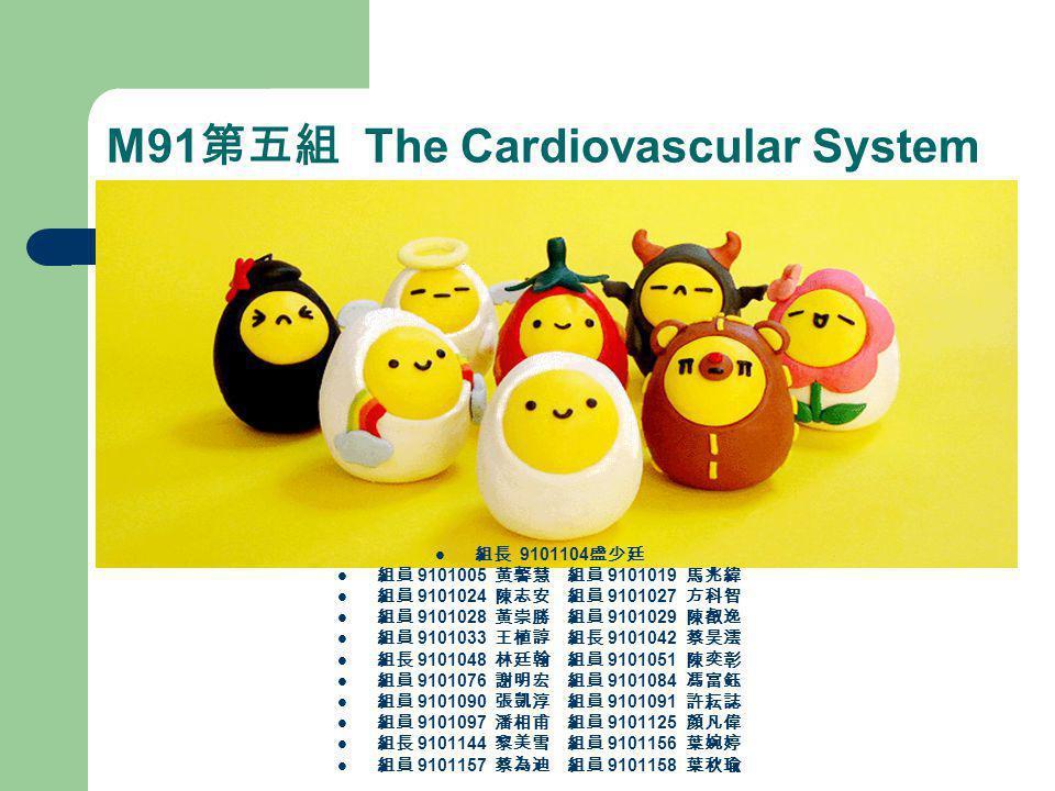 M91第五組 The Cardiovascular System