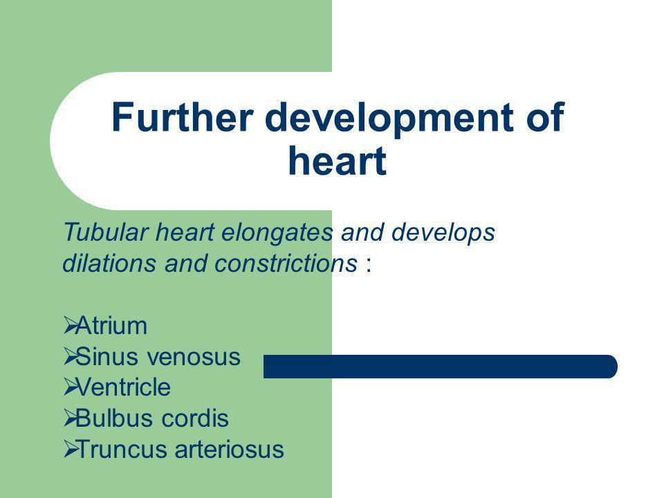 Further development of heart