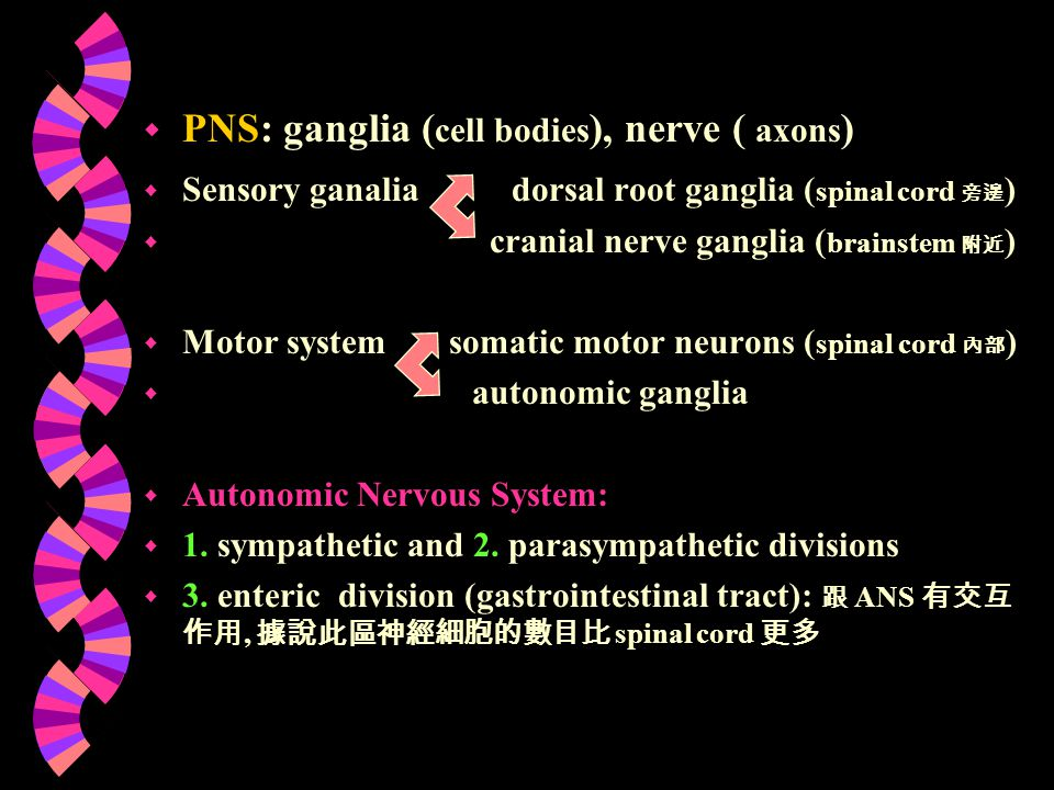 PNS: ganglia (cell bodies), nerve ( axons)